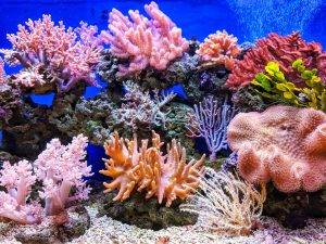 https://www.soulandsurf.com/wp-content/uploads/2021/08/Journal-world-ocean-acidification-q-u-i-0G01UI1MQhg-unsplash-scaled-1.jpg