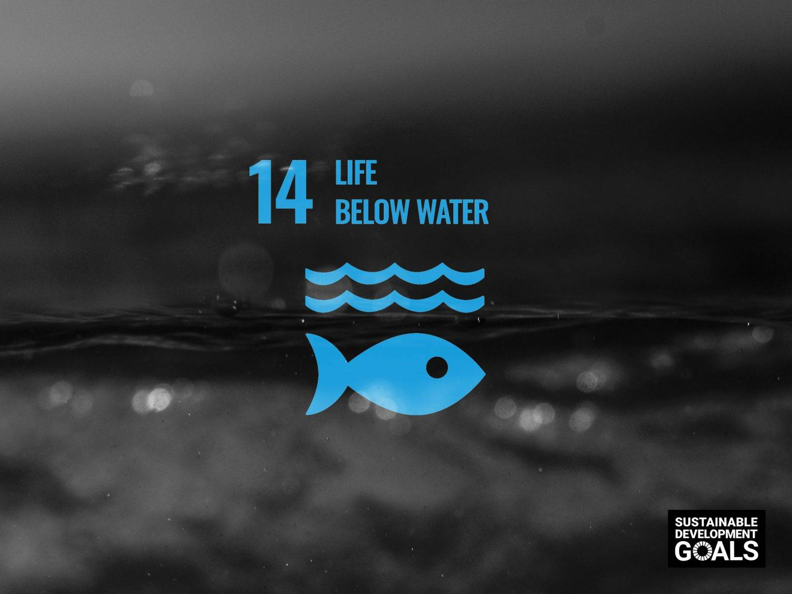 https://www.soulandsurf.com/wp-content/uploads/2021/08/our-sustainable-ish-plan-S_S-UNSDG-Life-Below-Water-e1628601861182.jpg Image