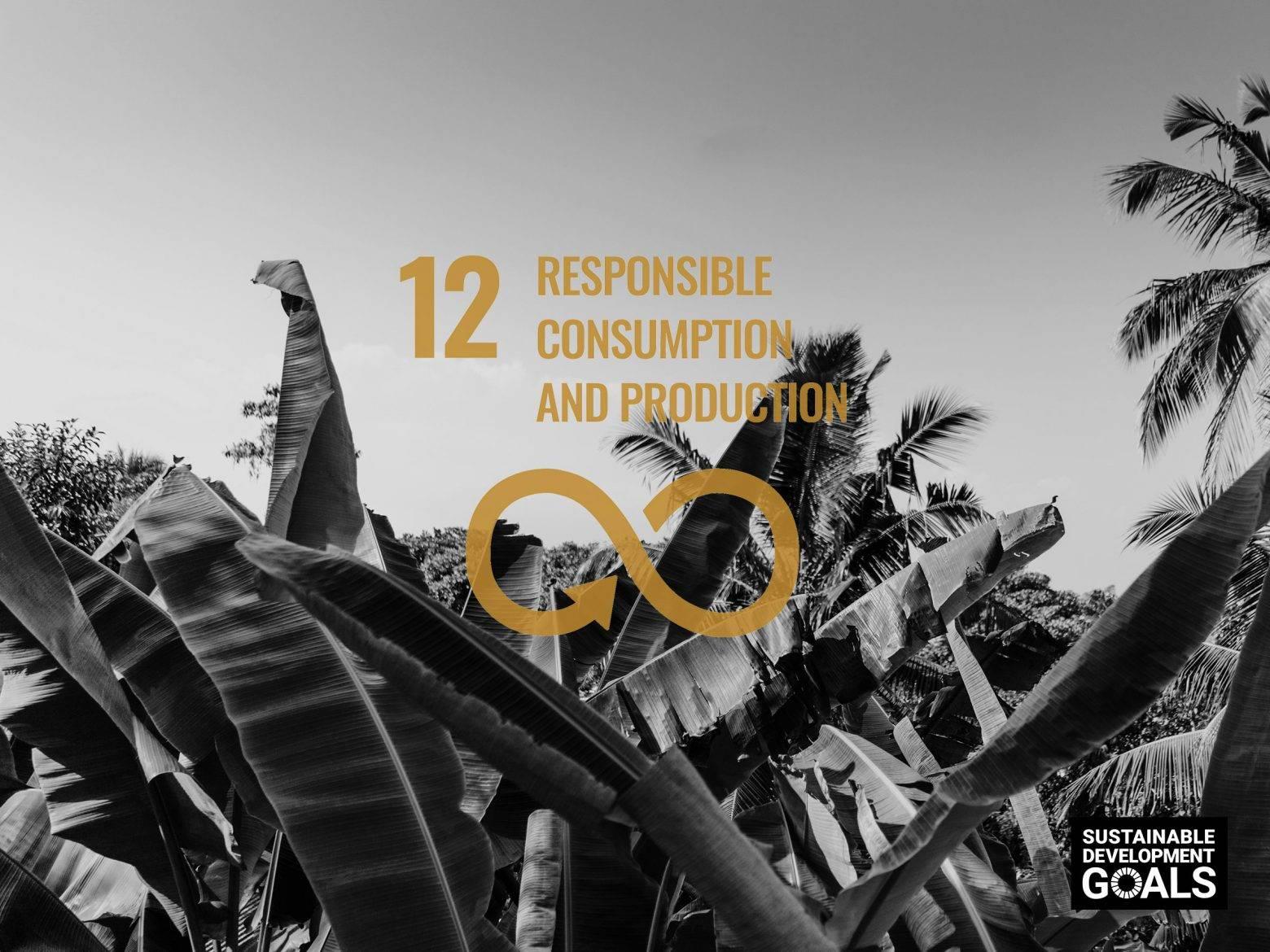 https://www.soulandsurf.com/wp-content/uploads/2021/08/our-sustainable-ish-plan-S_S-UNSDG-Responsible-Consumption-e1628601775884.jpg Image